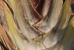 Palm Tenerife (Lark Ascending) Tags: plant tree flora palm weave woven dry texture frond zigzag leaf fibre fibrous tenerife spain muted earthy