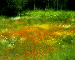 Summer Meadow (klauslang99) Tags: summer meadow nova scotia klauslang dreamy double exposure nature naturalworld northamerica canada