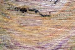 cut wood (walmarc04) Tags: cut wood plum tree image prun lemn free gratuit