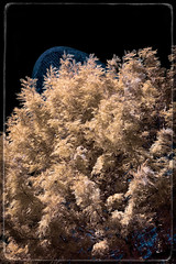 Agbar i les fases del cicle hidrològic. Fase #1: Evaporació (Ar@lee) Tags: barcelona catalunya airelibre torreagbar jeannouvel clot bordeparafotos construcción d50 espectrecomplet exteriors barcelonaexperience fullspectrum filtre720nm fotografíainfrarroja photographyinfrared ir nikond50 paisajeurbano arquitectura yellow sky tree blue black
