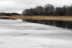 Vaskjala veehoidla (Jaan Keinaste) Tags: pentax k3 pentaxk3 eesti estonia loodus nature vaskjalaveehoidla veehoidla reservoir jää ice vesi water kõrkjad ruches piritajõgi jõgi river