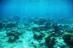 in numbers... (Landersz) Tags: philippines filippine coron palawan club paradise snorkeling turtle shark clownfish nemo dugong landersz canon 5dmk3 nimar gopro hero5