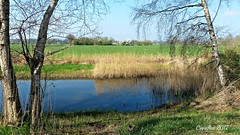 Uitzicht vanaf de Slaperdijk bij Renswoude. (Cajaflez) Tags: spring voorjaar printemps fruhling water riet berk sleedoorn sledge prunellier schwarzdorn reed schilf roseau slaperdijk renswoude geldersevallei