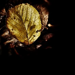 Nature will bear the closest inspection. She invites us to lay our eye level with her smallest leaf, and take an insect view of its plain. (abhishekskumar) Tags: naturelover nature natureaddicts natureswonder yellow leaf planetearth naturelove shadow