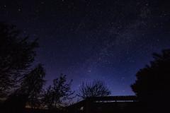 Starry Night (betadecay2000) Tags: germany german sternenhimmel sky heaven himmel sterne stern nacht nite night astro astrophotografie fotografie nachtfotografie dunkel dark zarrentin schalsee norden nordosten nordwesten april 2017 milchstrase milkyway bäume baum tree trees astronomie astronomy