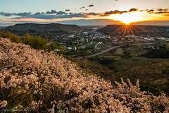 Good Morning, Golden (Pulver41) Tags: golden colorado lookoutmountain lookoutmountainroad sunrise landscape city spring flowers wildplumflowers sunburst coorsbrewery coloradoschoolofmines