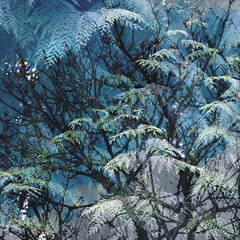 (Ali's view) Tags: evergreen conifer deciduous spring multipleexposure blue green woodland colour branches tree
