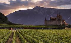 Romantic castle... (Alex Switzerland) Tags: aigle switzerland suisse schweiz svizzera castle vaud wine evening canon eos 6d landscape