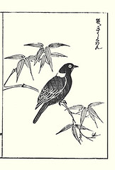 Common hill myna (Japanese Flower and Bird Art) Tags: bird common hill myna gracula religiosa sturnidae shotaro asami nihonga woodblock picture book japan japanese art readercollection