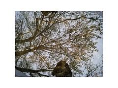 IMG_20170402_193528 (Emilio Faienza) Tags: roma capitale riflesso autoritratto alberi acqua tevere pozzanghera huawei p9lite ngc vivian mayer