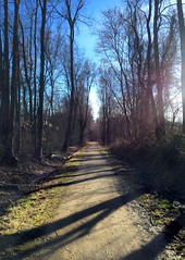 #Shadowoftrees #inthewoods #shadowsfall #settingsun #lightandshadows #mikeliebler #CTnature (mikeliebler222) Tags: shadowoftrees inthewoods shadowsfall settingsun lightandshadows mikeliebler ctnature
