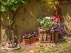 Fleurs sur cageot (Co-jjack) Tags: alsace fleurs cageot hdrenfrancais hdrsingleraw