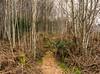 Silver Birch Wood (Dougie Milne Photography) Tags: silverbirch rosswood woods rosspoint westhighlandway scotland outdoor scottish highlands uk lochlomond trossachs loch lomond sallochybay trees rowardennan forest wood footpath