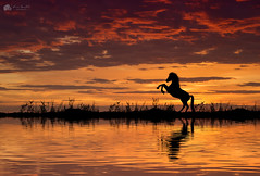 Horsing around... (Kerriemeister) Tags: digital art creative imagination photoshop compostie horse silhouette silhouettes sunrise reflection water ripples dreamlike fantasy colourful