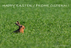 happy easter to all of my flickr friends <3 (photos4dreams) Tags: gersprenz münster hessen germany naturschutz nabu naturschutzgebiet photos4dreams p4d photos4dreamz nature river bach flus naherholung bunny easterbunny hase feldhase ostern osterhase zweiohrhase