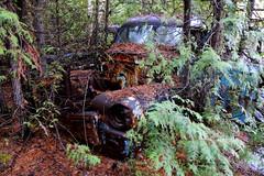 IMG_2751 (Irina Souiki) Tags: rusty crusty cars mcleansautowreckers milton ontario old oldcars