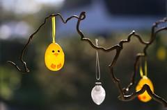 decorated Easter branch (HansHolt) Tags: easter easterbranch paastak corkscrew hazel kronkelhazelaar egg ei chicken kuiken vase vaas tradition dutch netherlands bokeh dof canon 6d 100mm canoneos6d canonef100mmf28macrousm
