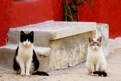 IMG_7871 (Garcerán Rubén) Tags: gatos