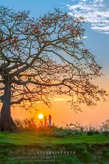 _U1H9718-Tam Giang,Yen Phong,Bac Ninh,0311 (HUONGBEO PHOTO) Tags: canoneos1dsmarkiii ef100400mmf4556lisusm hoànghôn bắcninh yênphong tamgiang ngãbaxà thángba mùahoagạo câygạo photography vietnamlandscape vietnamscenery asian clouds countryside sunbeam sunset cottontreeflowerseason colorful redsilkcottontree scenery outdoor