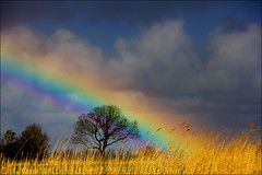 Rainbow (Hetty S.) Tags: rainbow nature tree trees sky clouds holland spring colors canon eos hetty hettys regenboog natuur naturaleza natural