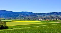 Pays de Vaud (Diegojack) Tags: chavannesleveyron vaud suisse paysages campagne cuarnens cultures colza