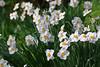 spring meadow (dr.larsbergmann) Tags: flowers flora languageofflowers ef100400mmf4556lisiiusm nature natureandnothingelse naturemasterclass fantasticnature