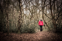 On the way to Grandma's house (Matthew Brown 7) Tags: butternabwood trees leaves red woman coat nikond750 50mmf18