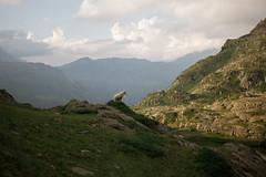 Mouton au lac du Brévent (Sylvain Alcayna) Tags: sheep frenchalps apls stormlight brevent lac hiking wildcamping canon550d canon24mmpancake