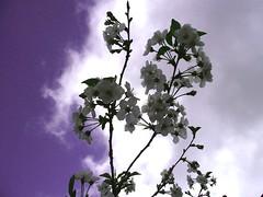 Buon 25 Aprile (Fausto Bufardeci) Tags: explore fiore nuvole