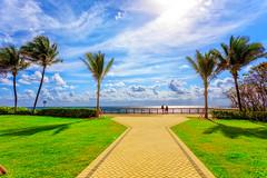 Deerfield Beach (cj13822) Tags: deerfield beach canon 5d mark iv florida 1740mm l landscape morning sun palm trees