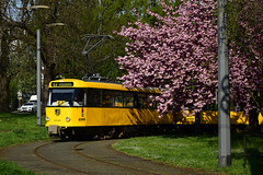 Tatra T4D #224_263 DVB Dresden Drezno (3x105Na) Tags: tatra t4d 224263 dvb dresden drezno strassenbahn strasenbahn tramwaj tram niemcy deutschland germany plauen gleisschleife wiosna frühling