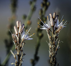IMG_3173 (ibzsierra) Tags: planta folr canon 7d 100400isusm salinas parque natural ibiza eivissa