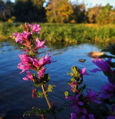 Riverside Flowers (tquist24) Tags: flowers trees flower macro tree geotagged nikon indiana elkhart stjosephriver nikoncoolpixaw100