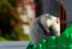 (www.lescaillouxdecoline.com) Tags: castle 50mm nikon rat nikkor f18 18 d3100