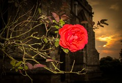 Sunset.29.9.14 (deltic17) Tags: light sunset cemetry sky church graveyard rose night dark romance romantic