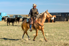 Western Stride (www.toddklassy.com) Tags: ranch sky horse man motion west male industry beautiful beauty hat leather animal horizontal rural walking landscape person countryside concentration cowboy montana day mt ride cattle adult loop action outdoor farm candid beef country working documentary gear gritty rope dirty retro riding american lloyd western americana mitchell copyspace wilderness agriculture breed sideview livestock wildwest horseback saddle equine tack lookingaway gallop quarterhorse westernwear roping lasso greatplains stride modelrelease colorimage blainecounty