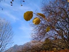 Autumn is coming... (Marythere *on/off*) Tags: sky panorama mountains golden leaf view blu