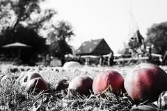 2014-10-04-Klempenow-20141004-135729-i194-p0091-_Bearbeitet1311-ILCE-6000-24_mm-.jpg