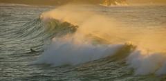 The Wave Of Day (rosiebondi) Tags: ocean sunrise surfer wave australia bronte