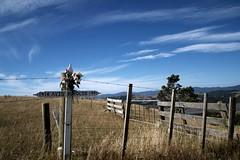 P1277963 e (dam.dong) Tags: travel camping newzealand olympus coromandel campervan e500