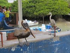 Galápagos - Isabela-3