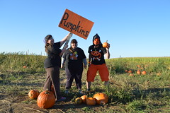 Carmen Halliwell, Angela Halliwell, Mexican Wrestler Jack-o'-lantern Pumpkin, in the pumpkin patch field (RYANISLAND) Tags: thanksgiving family autumn orange holiday fall halloween garden season pumpkin fun outdoors october fallcolor farm fallcolors 14 pumpkins farming seasonal samhain celebration squash pumpkinpicking celtic calabaza autumnal 31st happyhalloween equinox calabasas calabash 2014 calabazas orangecolor happythanksgiving autumnalequinox colororange october31st orangecolors ocheshamhna calabasse colorsorange oche 142014 samhainfestival celticholiday shamhna pickpumpkins thesamhainfestival