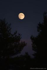 Moonrise ... tree framed (Ken Scott) Tags: trees sunset usa fall twilight october michigan lakemichigan greatlakes moonrise crop freshwater voted 2014 leelanau 45thparallel sbdnl sleepingbeardunenationallakeshore mostbeautifulplaceinamerica