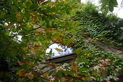house lampens - hartmann (Jrn Schiemann) Tags: house green architecture facade contemporary modernism juliaan villa residence beton flanders parthenocissus brut gavere wingert lampens tricuspidata lampenshartmann