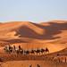 Sunrise Dunes of Merzouga_8323