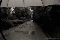 rainy day (Takeshi Nishio) Tags: uv  nikonfm3a   fujiacros100 ei100  16mmfisheye  spd1120deg65min filmno800