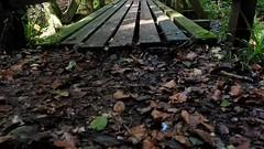 M1122604.MOV (Mel Stephens) Tags: 20141012 201410 2014 olympus omd em1 1240mm microfourthirds rocks solitude glen esk angus scotland uk video modified mirrorless pro mzuiko m43 f28 28 q4