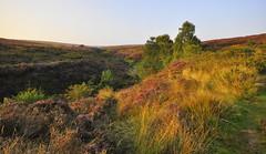 Beautiful (petefreeman75) Tags: trees grass sunshine heather moors northyorkmoors