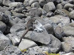 Galapagos - San Cristobal-63