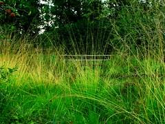 IMG_0091 b Oktober (Traud) Tags: germany deutschland sommer herbst gras grün teich garten steg laufen salzach fusgängersteg naturschutzakademie